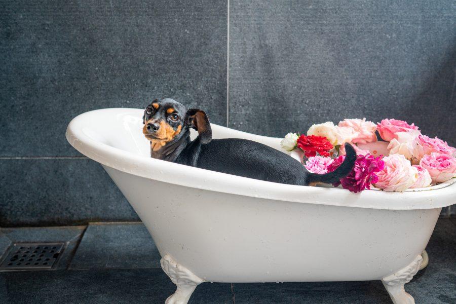 一人暮らしでお風呂(湯船)に入る人の割合は約6割